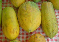 File:Carica papaya dsc07806.jpg