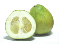 File:Citrus grandis - Honey White.jpg