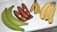 File:Bananavarieties.jpg